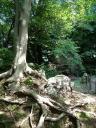 Baumgruppe Park im Schloss von Nagoya